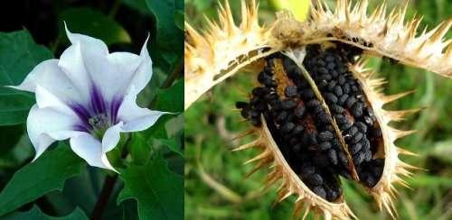 Топ-10: растения, которые хотят и могут вас убить