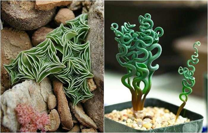 Комнатные растения, которые словно с другой планеты (13 фото)