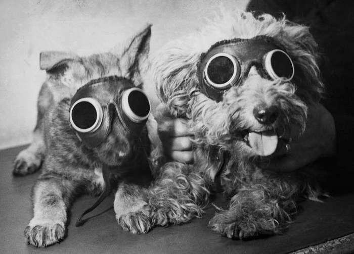 Как в США отмечают День щенка