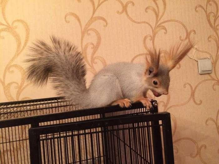 Спасенный бельчонок стал новым членом новосибирской семьи