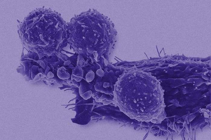 10 ожидаемых революций в биологии