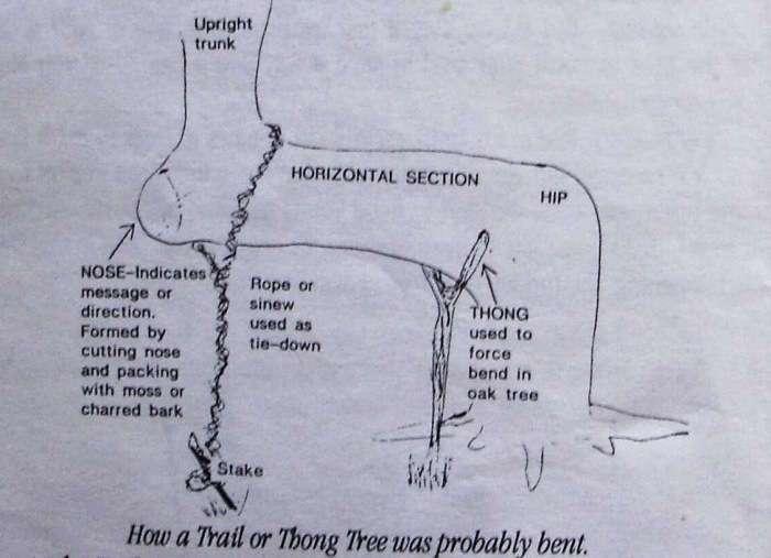 Оригинальный способ от индейцев для ориентирования в лесу