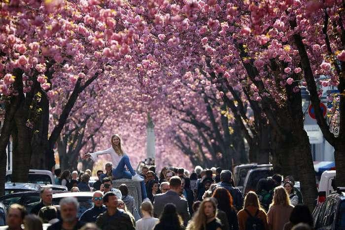 Весна идет — весне дорогу!