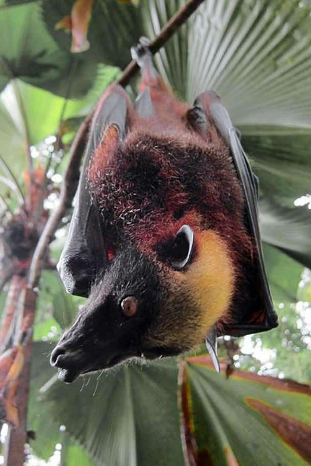 Любопытные и, возможно, ещё неизвестные вами факты о летучих мышах