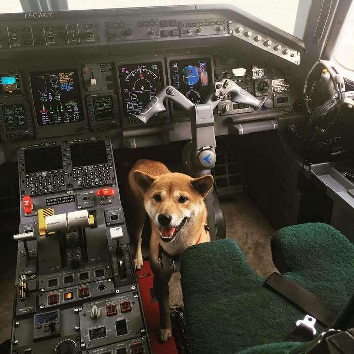 Пилотесса, которая возит знаменитостей