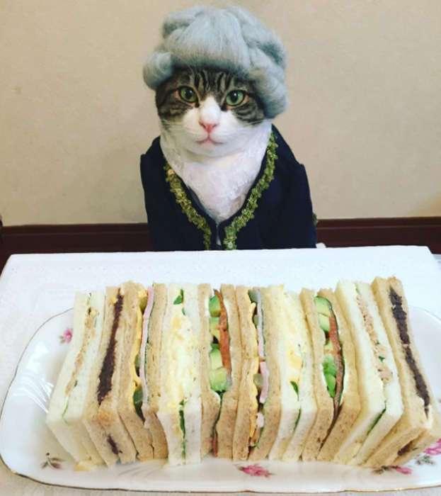 Этот котик &8211; идеальная модель для фотосессии