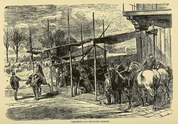 Чем питались жители Парижа во время осады города