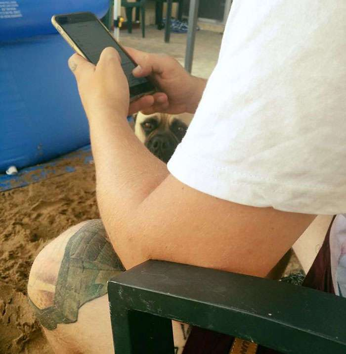 Эта собака постоянно шпионит за своим хозяином, где бы тот не находился