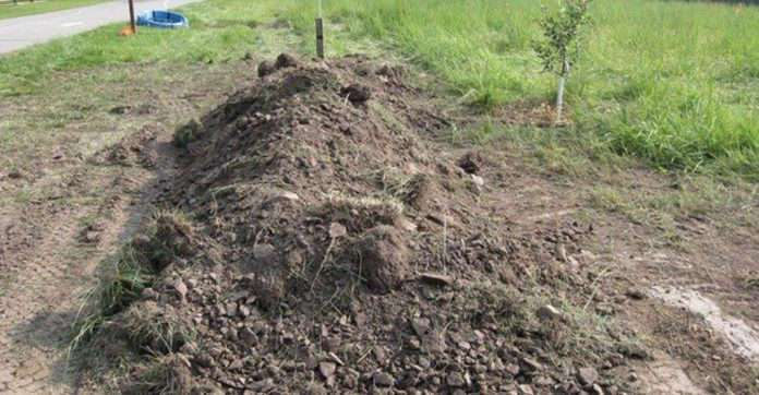 Несчастное животное похоронили заживо