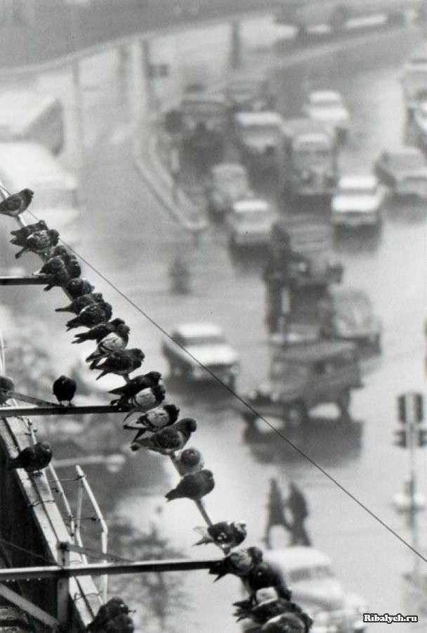 Подборка фотографий из разных времен и мест (108 фото)