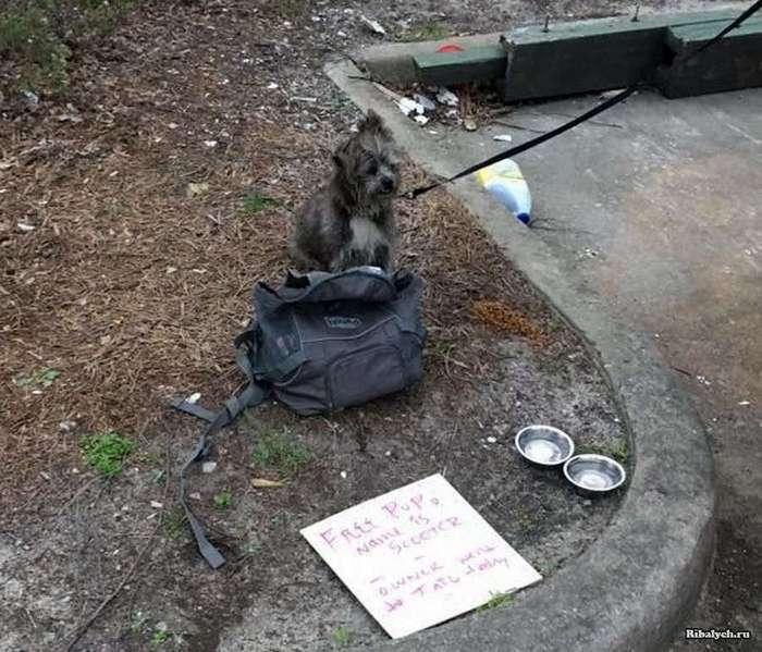 История брошенной собаки: «Свободен. Мой хозяин сегодня сел в тюрьму» (11 фото)