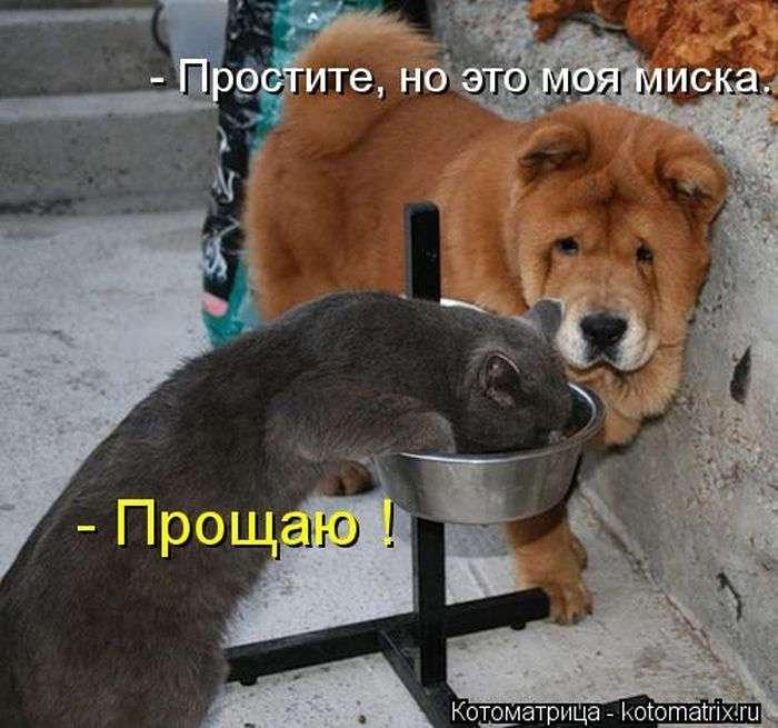 Немного из жизни котов.