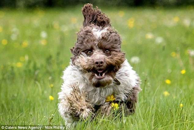 Фотограф снял бегущих собак, и это очень смешно