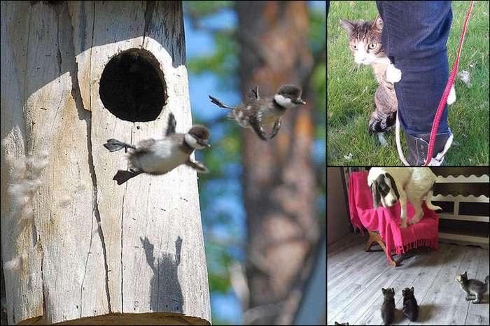 15 смешных фото, на которых животные что-то сделали в первый раз