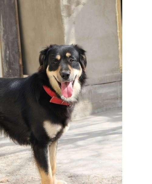 Чудесная история выздоровления рахитичного щенка