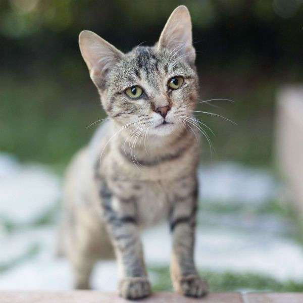 Кошки всех пород с фотографиями, названиями и особенностями характер