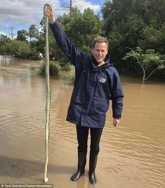 Змееловы вытаскивают десятки опасных змей из домов австралийцев после циклона