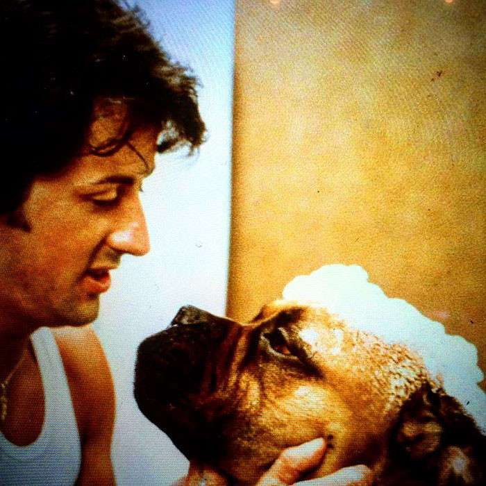Сильвестр Сталлоне поведал в соцсети историю о своей собаке, отдав, таким образом, ей дань уважения