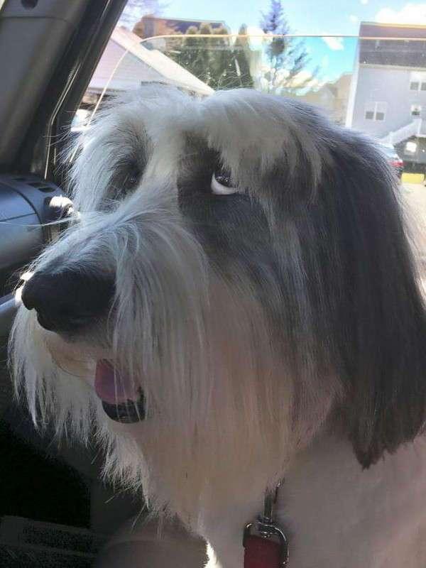 20 собак после наркоза, чьи забавные морды рассмешат вас до слёз