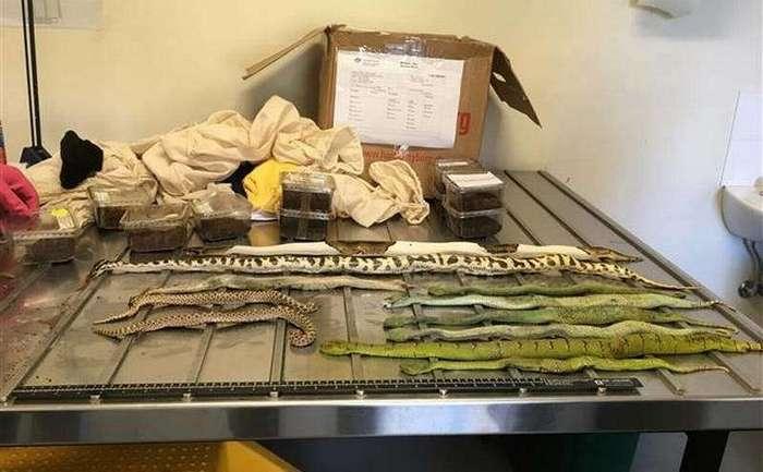 Кто-то отправил в Австралию под видом обуви коробку, полную ядовитых змей и пауков