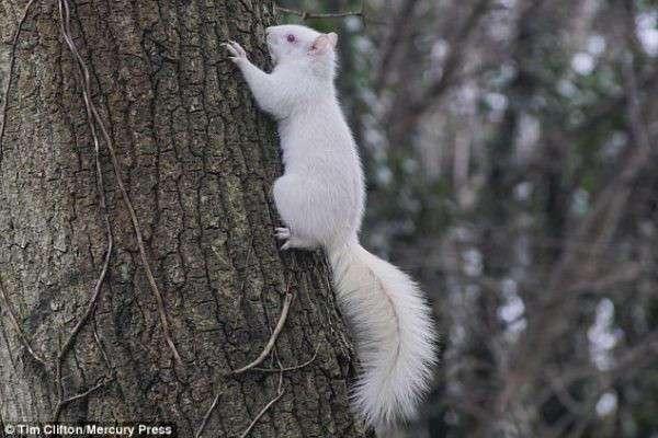 -У тебя есть что-то для меня, мистер?- В Англии в городском парке засняли редкую белку-альбиноса