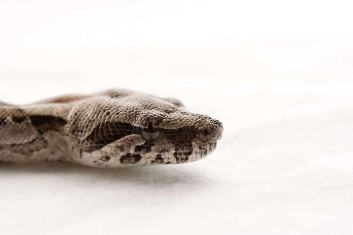 Cамое интересное о змеях.