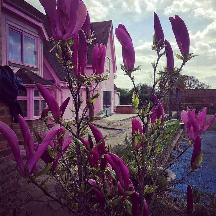 Если вам действительно нравится розовый цвет — этот дом для вас