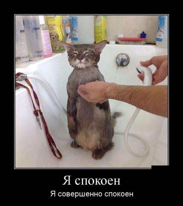 Приколы и Демотиваторы 06.04.2017 (30 фото)