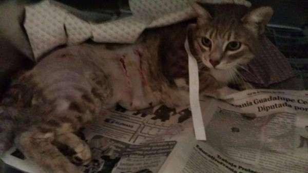 Кошка, пострадавшая от нападения собак, взяла опеку над... щенком