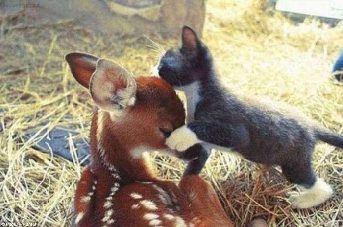 Трогательные примеры дружбы между такими разными животными