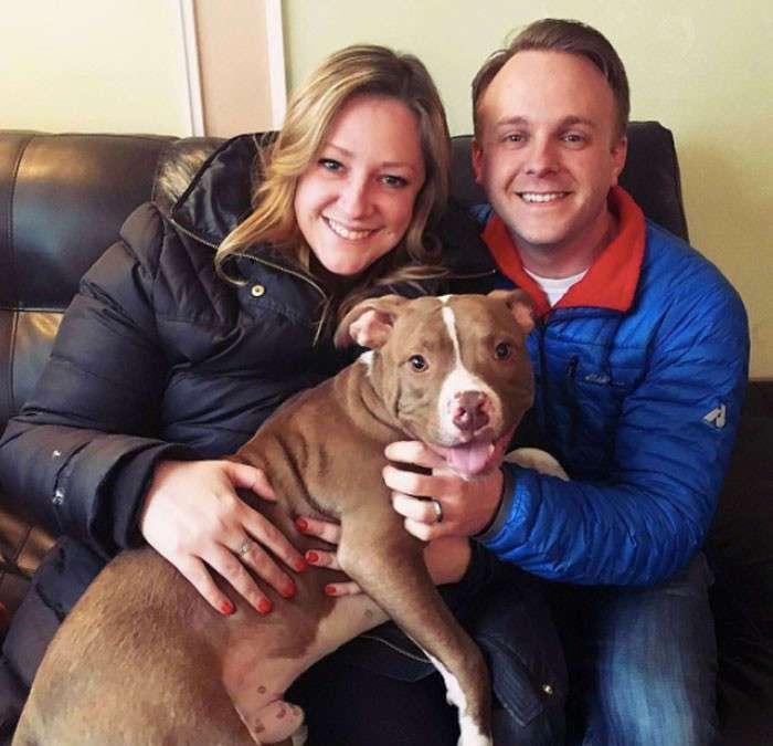 Брошенные щенки от стресса лишились шерсти, но их чудом спасли