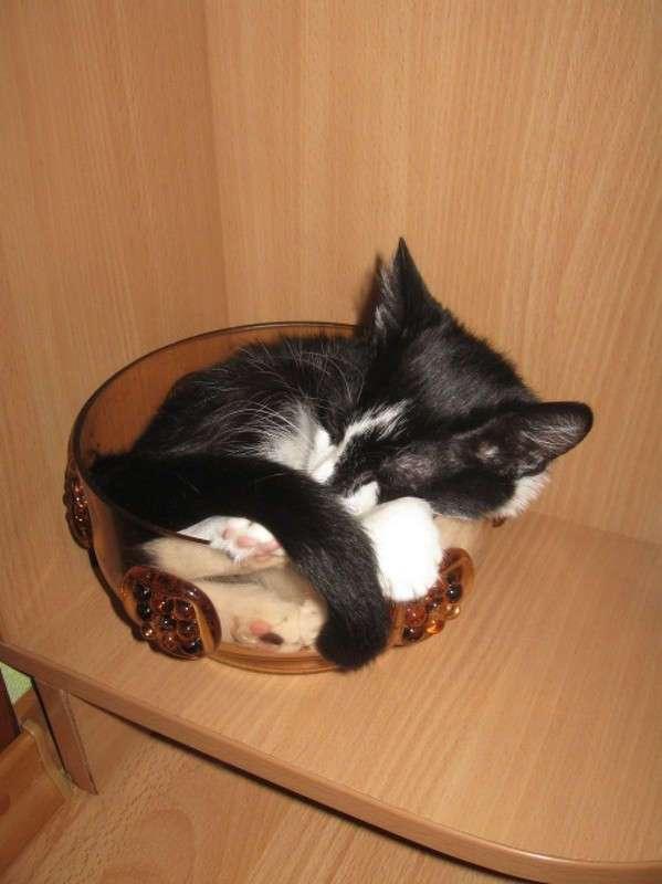 Коты, которых можно налить в любую емкость
