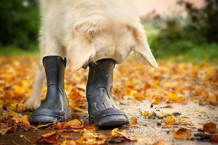 Очаровательные собаки в фотографиях Gabi Stickler