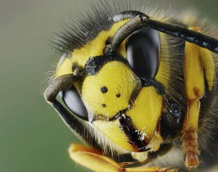 Макросъемка: Удивительный мир насекомых