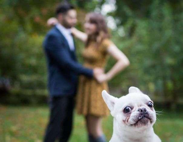 Смешные фотобомбы с собаками