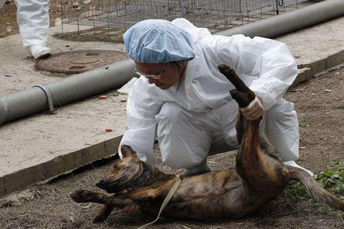 Тайвань стала первой азиатской страной, официально запретившей употребление в пищу кошек и собак