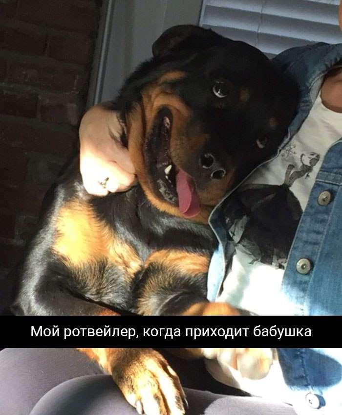 Собаки на которых невозможно смотреть без смеха.