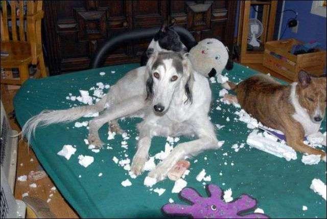 Собаки, которые были пойманы с поличным
