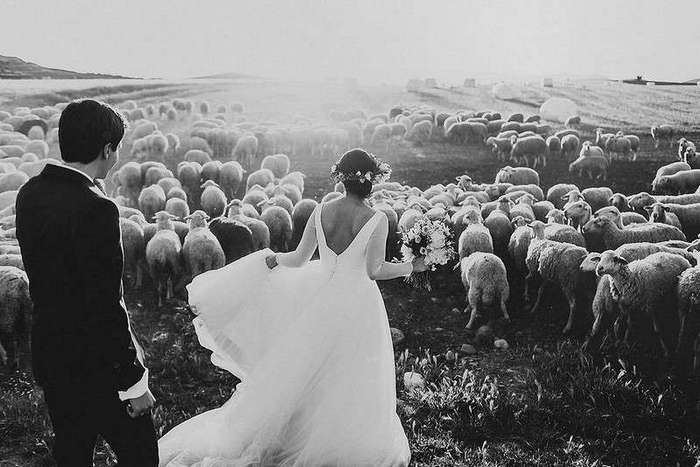 Великолепные свадебные фотографии