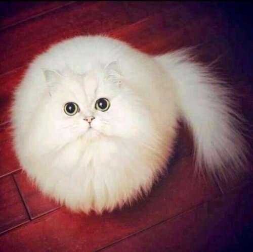 Очаровательные животные, которые находятся в идеальной форме — форме шара!