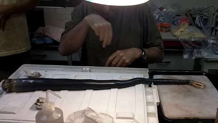 Гигантский червь питающийся сероводородом