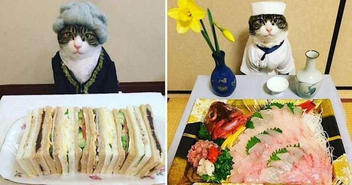 Кот-косплейщик -собирает сердца- по всему миру