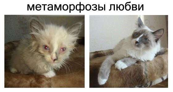 """Спасённые кошки """"до"""" и """"после"""""""