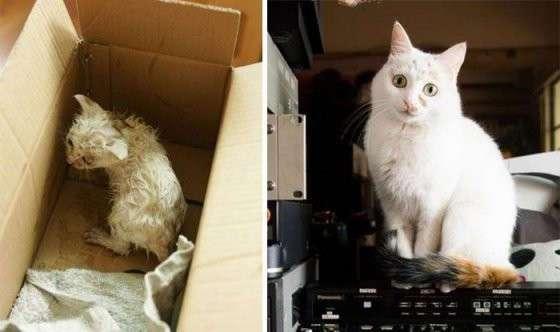 Спасённые кошки -до- и -после-