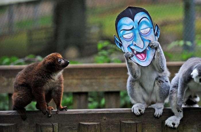 25 случаев, когда поход в зоопарк оказался смешным