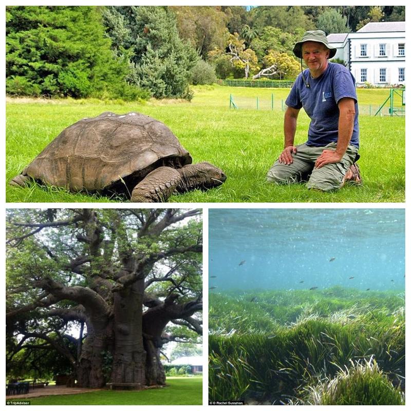 Самые древние живые организмы и где они обитают
