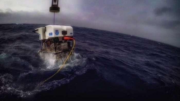 Кто живёт на дне Тихого океана: снимки, сделанные глубоководным аппаратом