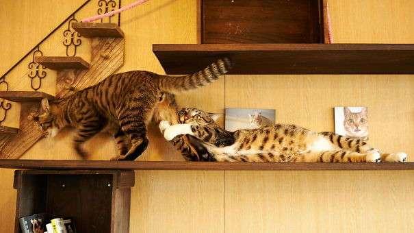 -Оскар- в студию! 16 фото котиков, которые все слишком драматизируют