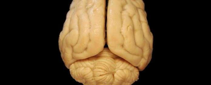Мозг может работать не так, как предполагали ученые