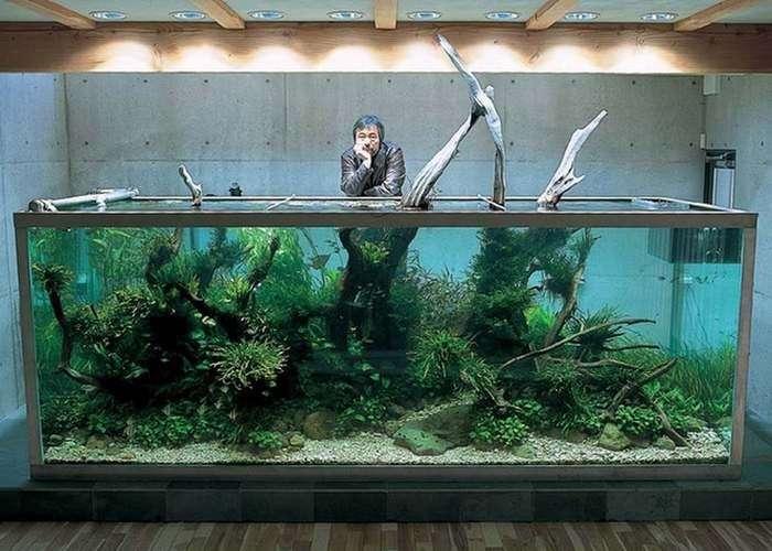 Потрясающие аквариумы, от которых невозможно отвести взгляд
